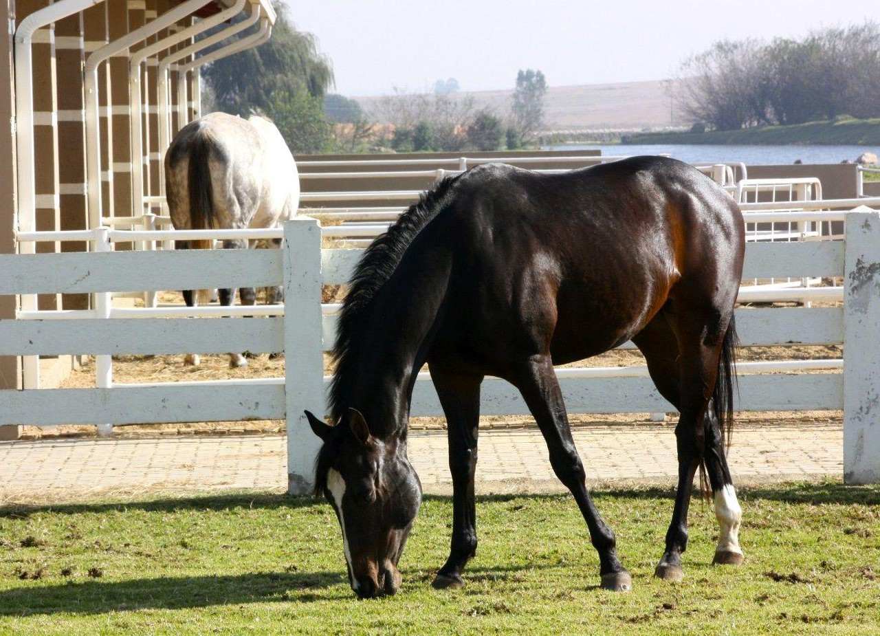 Equestrian Estate in Benoni | Kingstons Real Estate